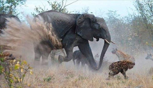 Vahşi doğadaki savaş 15
