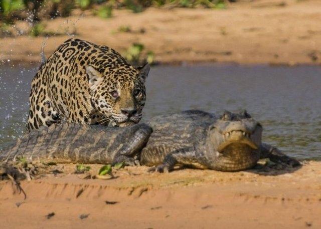 Vahşi doğadaki savaş 4