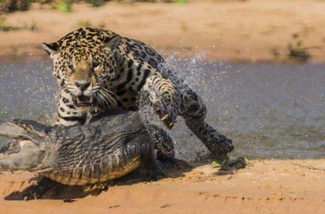 Vahşi doğadaki savaş 5