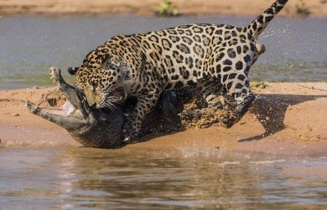 Vahşi doğadaki savaş 6