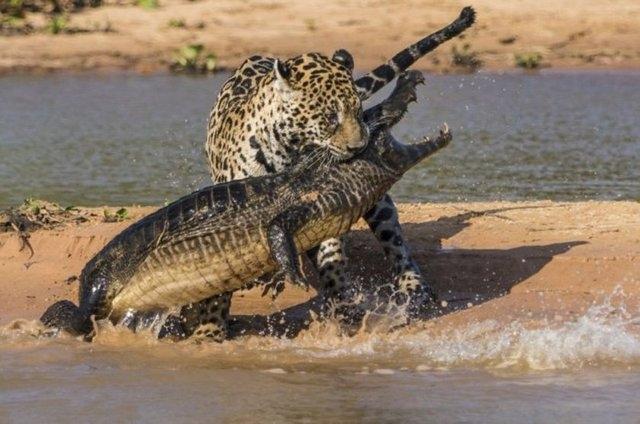 Vahşi doğadaki savaş 7