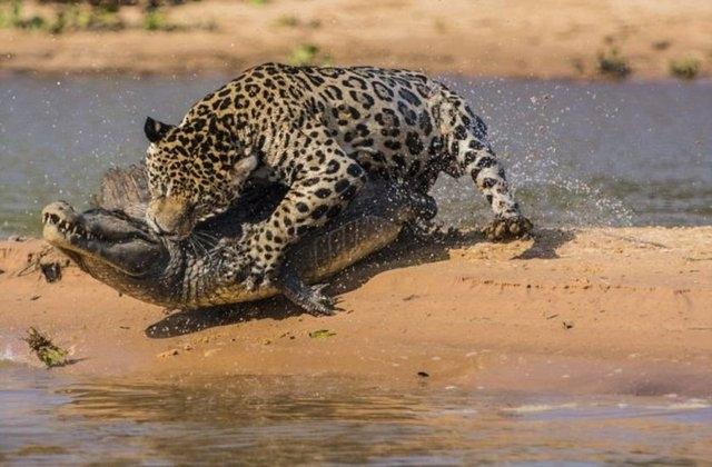 Vahşi doğadaki savaş 8