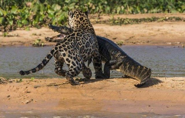 Vahşi doğadaki savaş 9