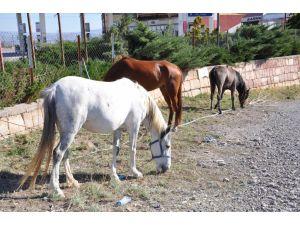 Başıboş atlar, sürücülere zor anlar yaşattı
