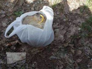 Çocukların bulduğu paketten bomba çıktı