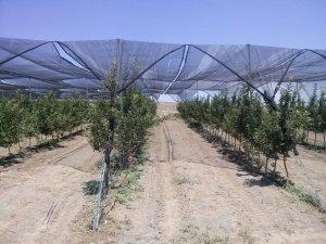 Güneş enerjili organik elmalar
