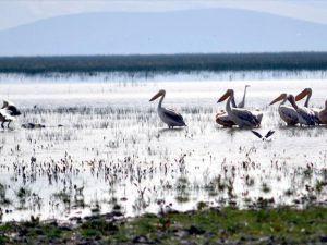 Eber Gölü'ndeki pelikan ve flamingolar ziyaretçilerini bekliyor