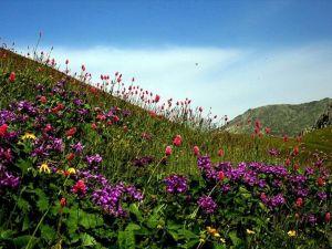 Dünyadaki bitki türleri sayıldı