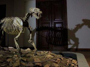 8,5 milyon yıllık fosiller adres değiştiriyor