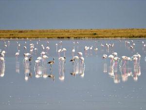 Flamingolara 'devlet' koruması