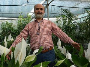 Kapalı ortamda sağlık için doğal reçete 'salon bitkileri'
