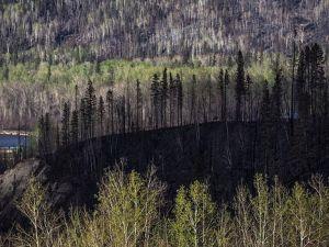 Orman yangını Kanada'nın milli gelirini de etkiledi