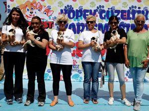 PATİ FEST 2016 Köpek Güzellik Yarışması düzenlendi