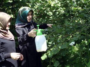 Liseliler 'zirai donu önleyici solüsyon' geliştirdi