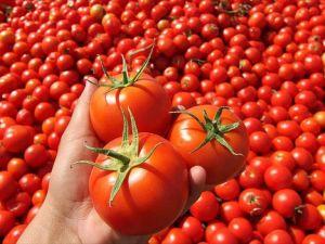 'Geçiş dönemi', domateste fiyatı 3 katına çıkardı