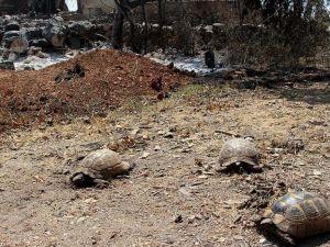 Orman yangınında zarar gören hayvanlar tedaviye alındı