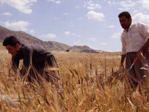 İran Irak'ta tarım arazileri kiralıyor