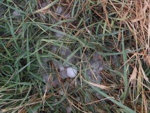 Ereğli'de yağan dolu ekinlere zarar verdi