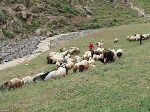 Fetö'den 'Destek Primi' Sahtekarlığı