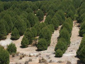'Kahraman Kazanlılar' İçin Şehitler Ormanı Kurulacak