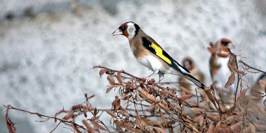 Saka Kuşu Avlayanlara 18 Bin 292 Lira Ceza