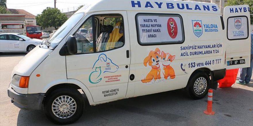 "Yalova'da Hayvan Ambulansı ""Haybulans"" Hizmete Girdi"