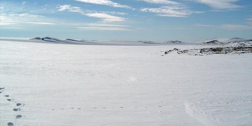 Grönland'da 3,6 Milyar Yıl Öncesine Ait Fosiller Bulundu