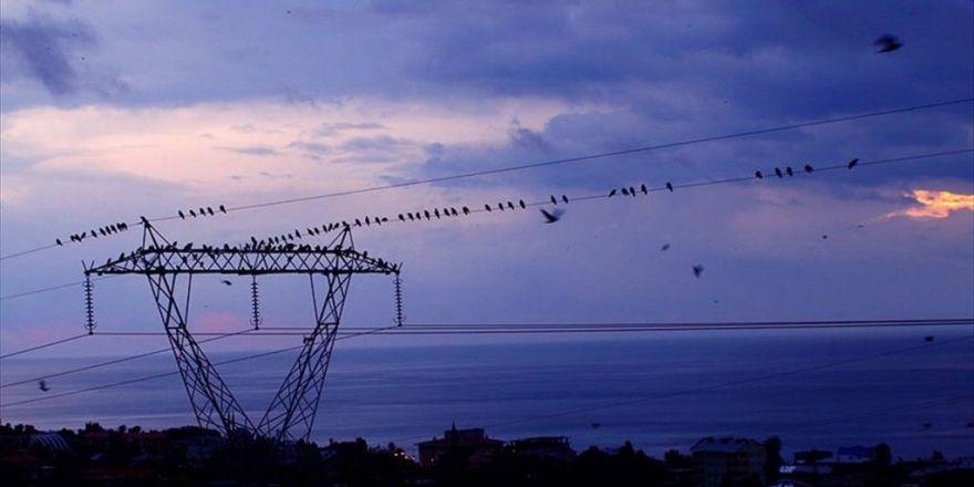Epdk'dan 895 Bin Liralık 'Göçmen Kuş' Bütçesi