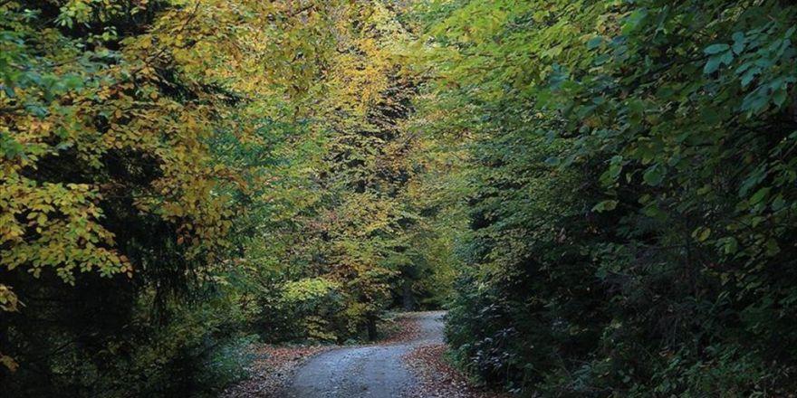 Orman Suçları 13 Yılda Yüzde 70 Azaldı