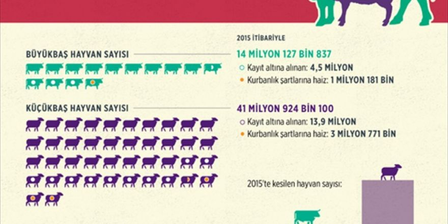 Türkiye Bayrama 5 Milyon Kurbanlık İle Hazır