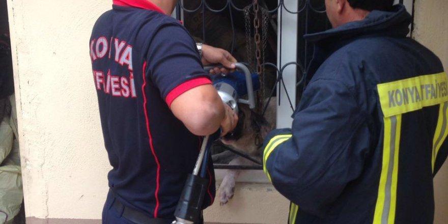 Kafası pencere demirine sıkışan köpek kurtarıldı