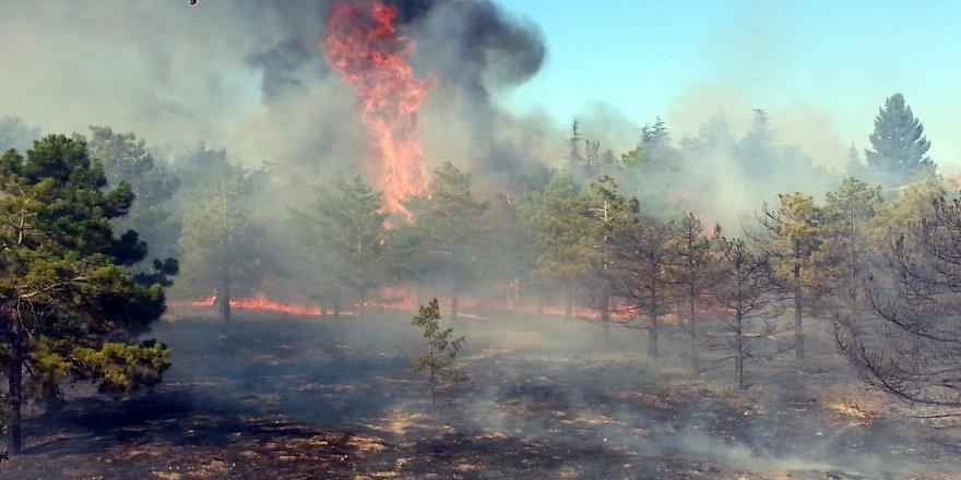 Fidanlıkta korkutan  yangın