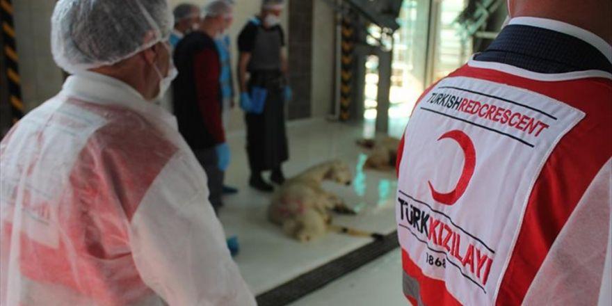 Türk Kızılayı 80 Bin Hisse Kurban Kesti