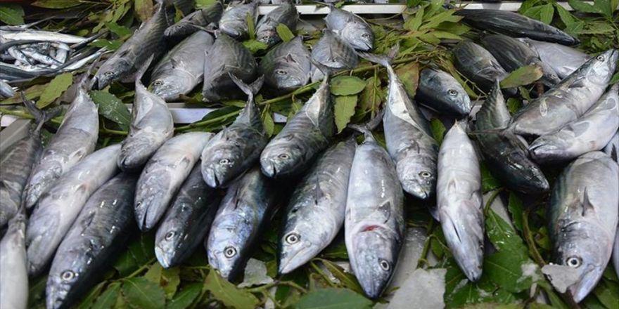 Balıkçıların Yüzü Palamutla Güldü