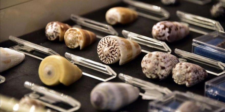 Yarım Asırda Topladığı Deniz Kabuklarını Müzeye Bağışladı