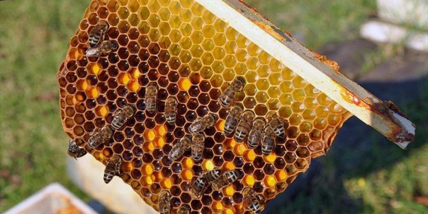 'Bilimsel Arıların Balı' Kilogramı 50 Liradan Satılıyor