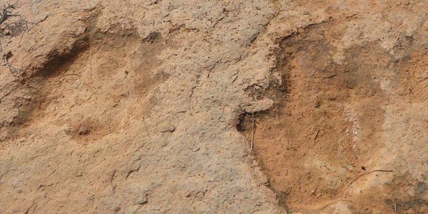Gobi Çölü'nde Titanozora Ait Ayak İzi Keşfedildi