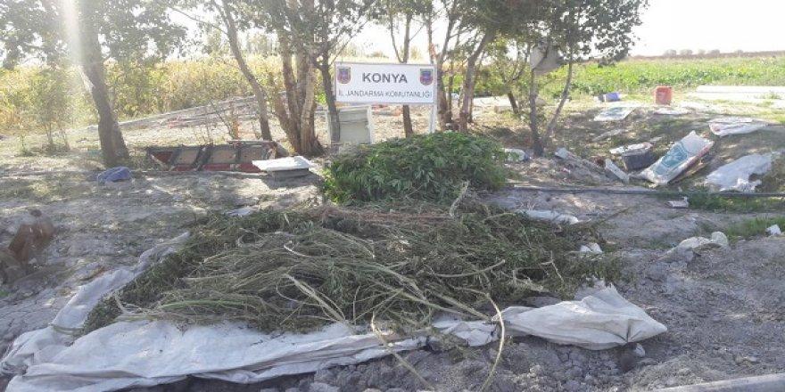Konya'da Hint keneviri operasyonu