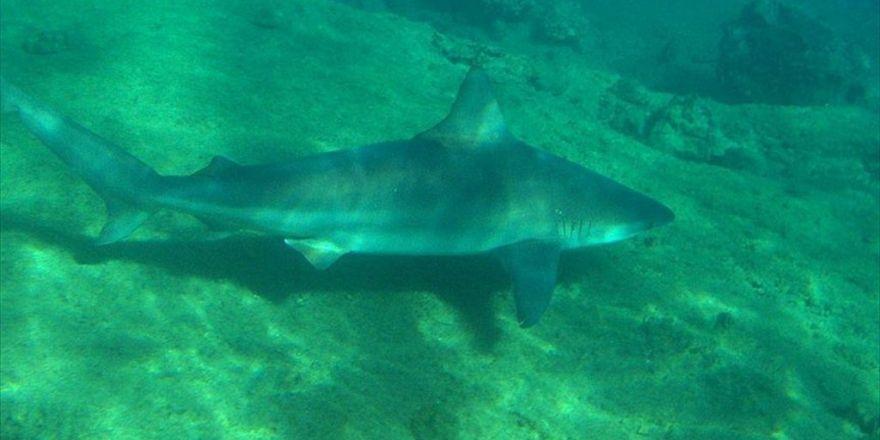 Abd'de Köpek Balığı Saldırısı