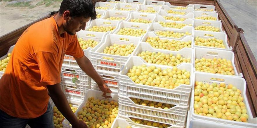 Rusya'dan Türk Gıda Ürünlerine Yönelik İlk Karar Çıktı