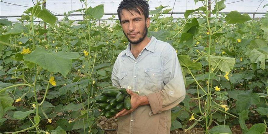 Seralarda İşçiydi 'Genç Çiftçi' Oldu