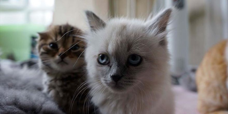 'Kaçak Kedilere' Sıcak Yuva