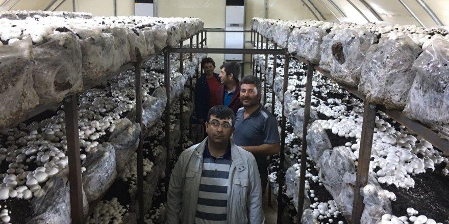 Beyşehir'de kültür mantarı yetiştiriliyor