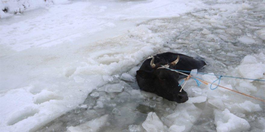 Konya'da donan göle inek düştü