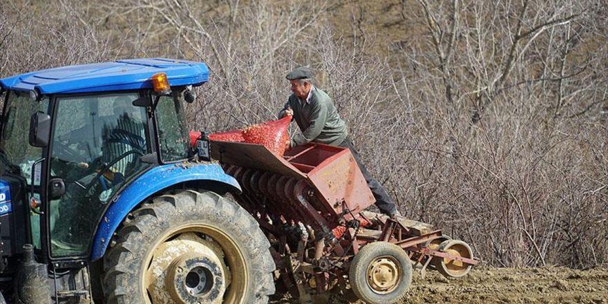 Çiftçinin 'Soğan' Mesaisi Başladı