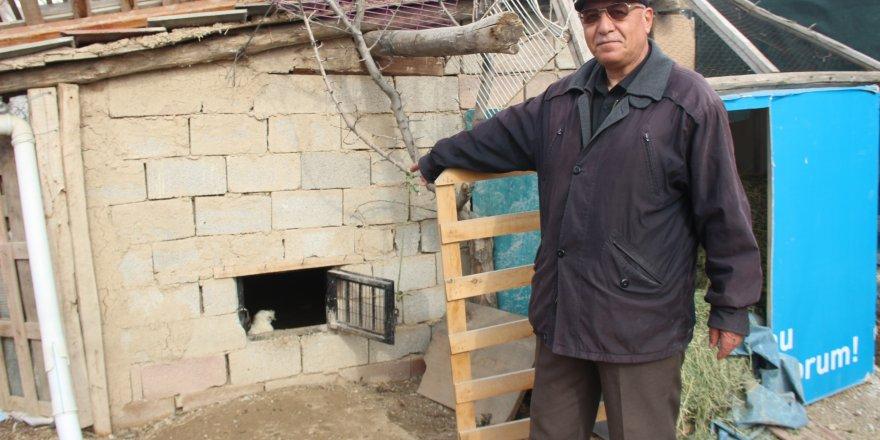 Kar maskeli hırsızlar tavus kuşlarını çaldı