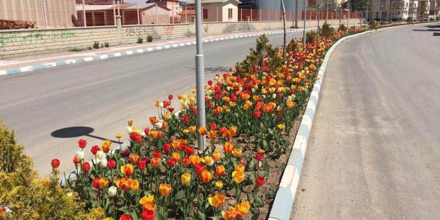 Beyşehir çiçeklerle süslendi