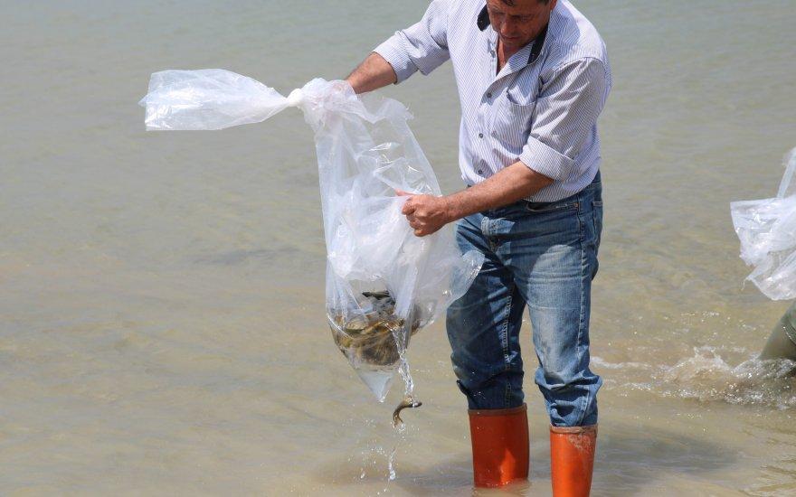 Beyşehir Gölü'ne yavru sazan balığı bırakıldı