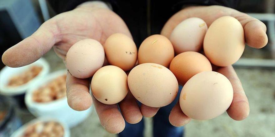 Yumurta Fiyatları Düştü Tavuk Fiyatları Yükseldi