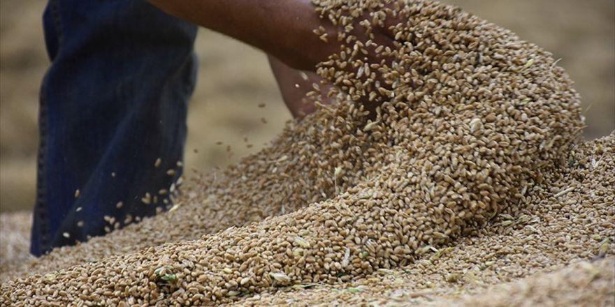 1,4 Milyar Liralık Buğday İsraf Ediliyor